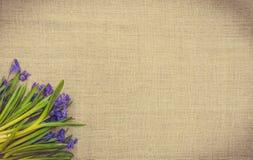 Карточка пасхи с цветками весны Голубое Scilla и linen ткань Стоковое Изображение RF