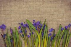 Карточка пасхи с цветками весны Стоковые Изображения