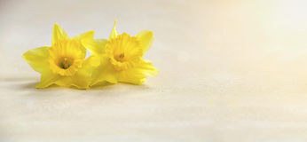 Карточка пасхи с цветком Стоковое фото RF