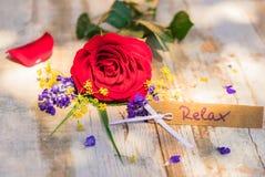 Карточка подарка для Relax на деревенской древесине с красной розой на день матерей или день валентинок стоковые изображения rf
