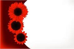 Карточка подарка солнцецвета Стоковые Изображения