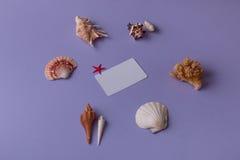 Карточка подарка с красивыми seashells Стоковое Изображение