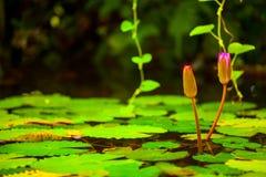 карточка предпосылки цветет сеть универсалии шаблона страницы лилии приветствию Стоковые Изображения RF