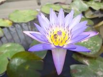 карточка предпосылки цветет сеть универсалии шаблона страницы лилии приветствию Стоковая Фотография RF