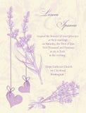 Карточка приглашения свадьбы.  Предпосылка лаванды. Стоковое Изображение