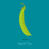 Карточка сладостного гороха Стоковые Фото