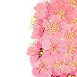 Карточка с вишневым цветом Сакуры также вектор иллюстрации притяжки corel Стоковые Фотографии RF