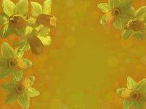 Карточка с желтыми daffodils Стоковое Фото
