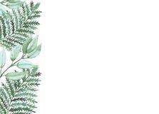 Карточка с листьями и папоротником зеленого цвета акварели Стоковое Изображение