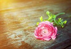 Карточка с подняла на старый деревянный стол в лучах солнца Стоковые Изображения