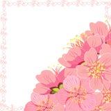 Карточка с углом вишневого цвета Сакуры также вектор иллюстрации притяжки corel Стоковое фото RF