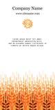 Карточка с ушами пшеницы Предпосылка дела земледелия Стоковое Фото