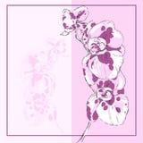 Карточка с цветками орхидеи Стоковое Изображение