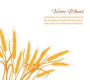 Карточка уха пшеницы бесплатная иллюстрация