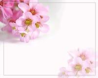 карточка цветет приветствия Стоковое Изображение