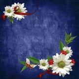 карточка цветет тесемки праздника Стоковое фото RF