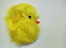 Карточка цыпленка пасхи Стоковое Фото