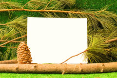 Карточка шаблона на предпосылке ветвей кедра Стоковое Фото
