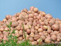 картошка горы стоковые изображения