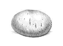Картошка Гравировать овощ стиля Стоковая Фотография RF