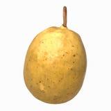 Картошка на белой предпосылке Стоковое фото RF