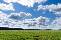 картошка поля Стоковое Изображение RF