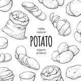Картошка рисуя квадратное знамя, органические свежие продукты стоковое фото rf