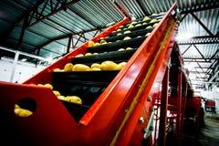 Картошка сортируя, фабрика обрабатывать и упаковки стоковые фотографии rf