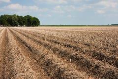 картошка харча поля готовая к вверх Стоковые Изображения
