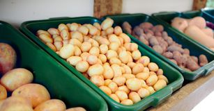 Картошка Стоковая Фотография