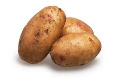 картошка Стоковое фото RF