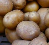 Картошки золота Юкона на рынке ` s фермера Стоковые Фотографии RF