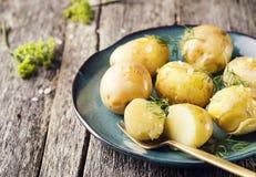 Картошки кипеть детенышами с укропом и оливковым маслом Стоковые Фотографии RF