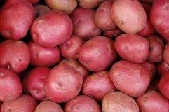 картошки красные стоковое изображение