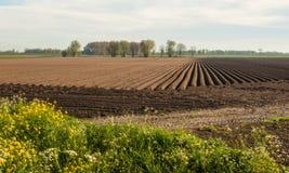 картошки поля большие засаживая Стоковое Фото