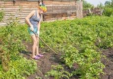 Картошки сапки weeding молодой женщины Стоковая Фотография RF