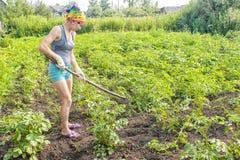 Картошки сапки weeding молодой женщины Стоковые Изображения RF