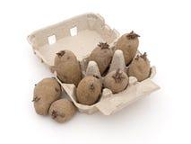 Картошки семени chitting в коробке яичка, на белизне Стоковые Изображения RF