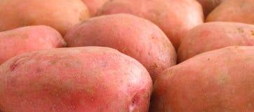 картошки цвета подняли стоковое фото