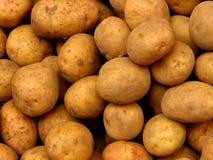 картошки Стоковая Фотография