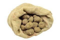 картошки Стоковые Изображения RF