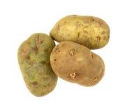 Картошки Russet на белизне Стоковые Изображения
