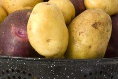 картошки yukon голубого золота органические Стоковые Изображения