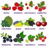 Карты для учить английский с ягодами иллюстрация вектора