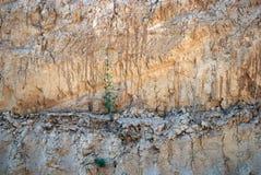 Карьер глины желтой глины Стоковые Изображения