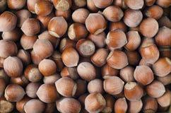 Каряя раковина грецкого ореха предпосылки фото стоковая фотография