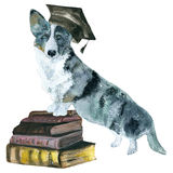 Кардиган собаки Стоковая Фотография