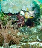 кардинальные рыбы Стоковые Фото