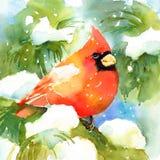 Кардинальная покрашенная рука иллюстрации зимы акварели птицы Стоковая Фотография