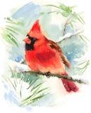Кардинальная покрашенная рука иллюстрации зимы акварели птицы Стоковые Изображения RF